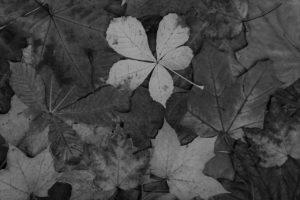 autumn-leaves-871286965014l8g8-2